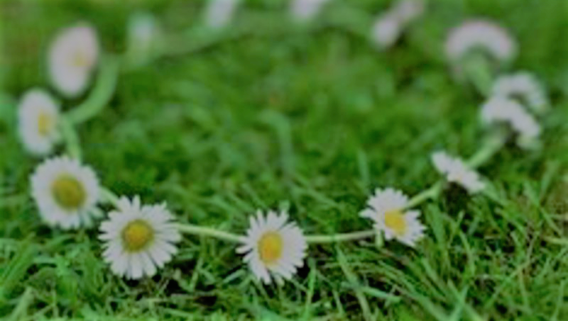 Daisy Chains.png