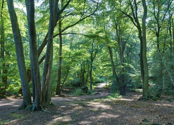 epping forrest