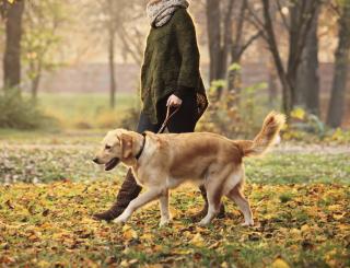 walking dog.png