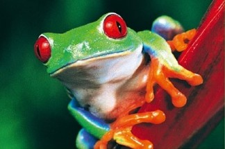 frog (2)