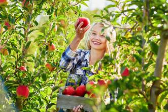 picking fruit
