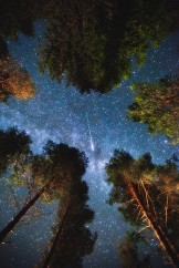 night sky through trees.jpg