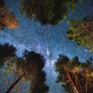 night sky through trees