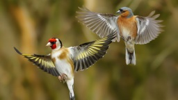 two goldfinches.jpg