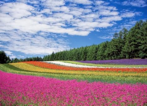 rainbow fields.jpg